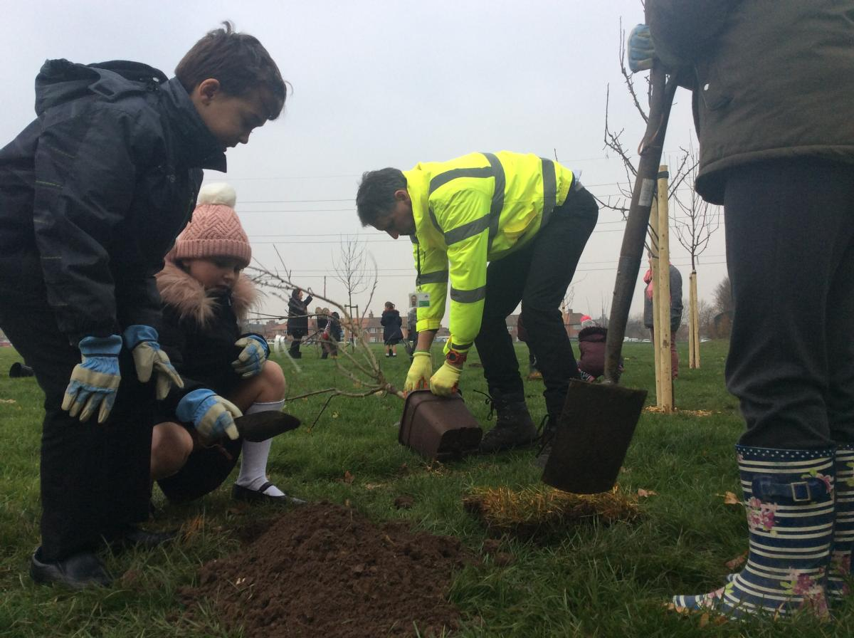 School children planting trees at St Helier